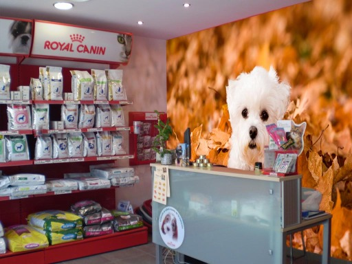 Fotomurales peluqueria canina fotomurales baratos for Fotomurales baratos online